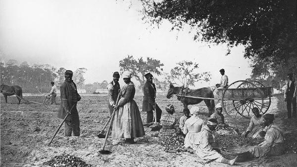 Slaves in James Mopskinson's Plantation