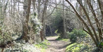 Lesnes Abbey woods, Bexley, London (Photo by Dudley Miles) (CC BY-SA) (Resized/Cropped)
