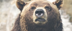 Stocks or Dollar About to Enter a Bear Market